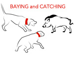 Bay Catch Hog Dogs