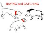 Bay Catch Hog Dogs