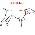 Dog Pointing