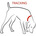Dog Tracking