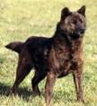 Kai Dog