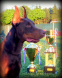 World Champion Titled Dobermans