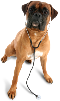 Dog Health Treatment
